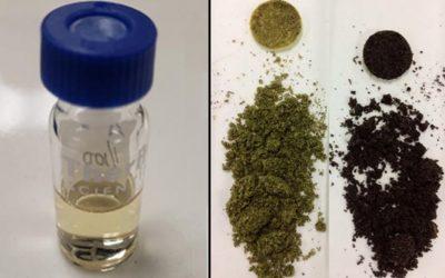Le cannabis : une toute nouvelle biomasse étudiée chez Innofibre